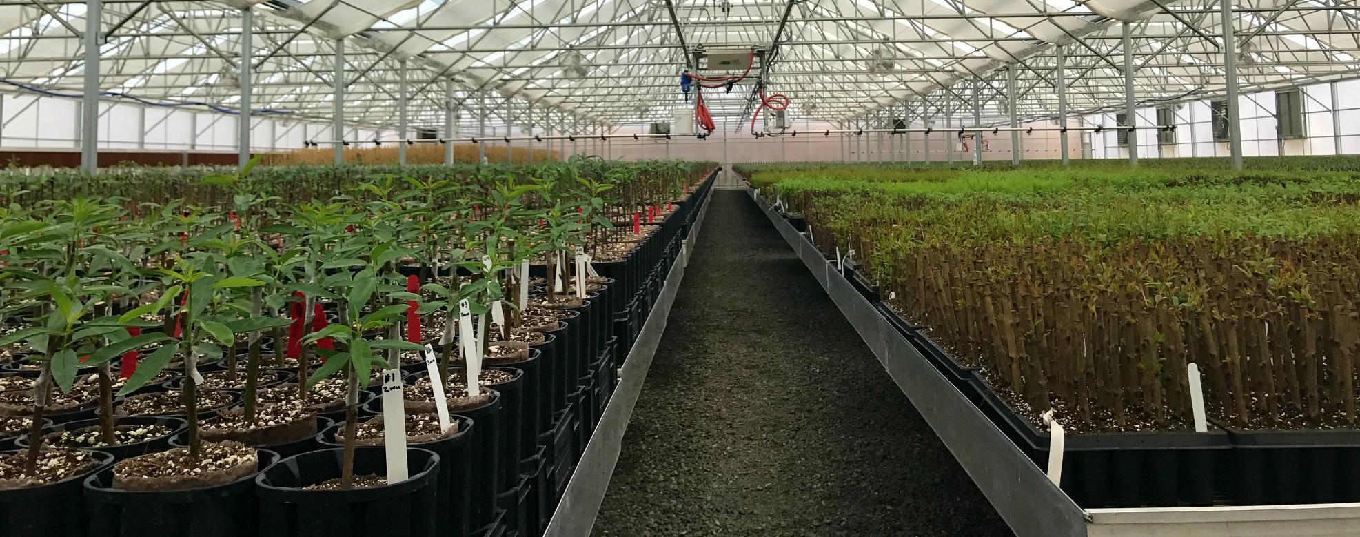 Ургамал, Нанобиотехнологийн <br /> үйлдвэрлэлийн бүс